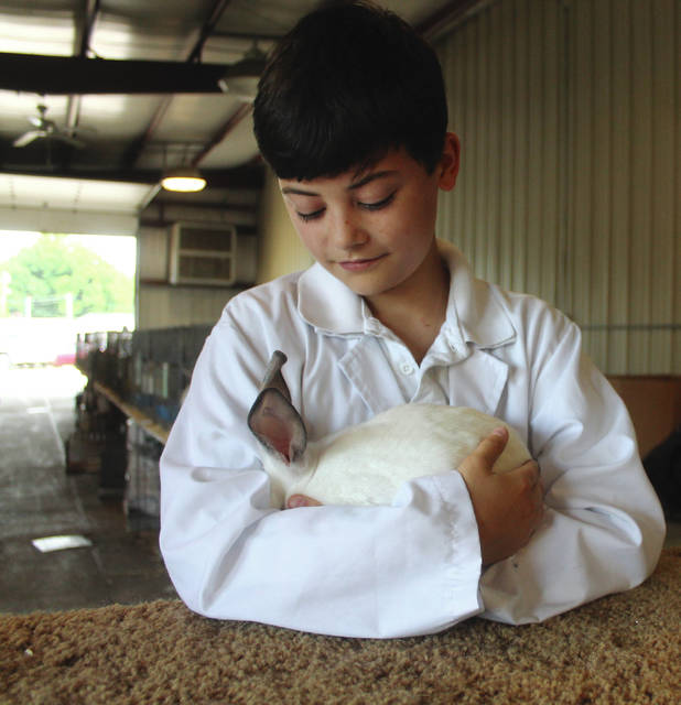 Anna Bolton   Greene County News Aidan Fermier holds his Californian rabbit in between shows July 30.